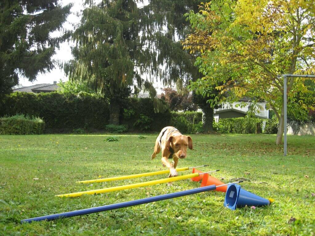 Lola_rennt_über_Slamlomstangen